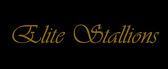 Elite-Stallions